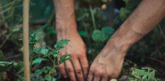 Hands Gardening