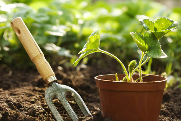 Best Gardening Tips for New Gardeners