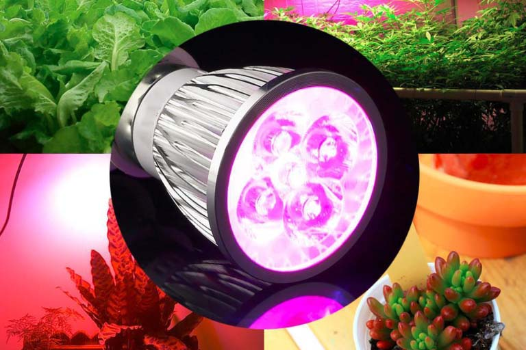 LED Grow Light Bulbs