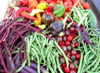 Bountiful Vegetable Harvest