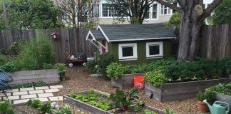 Raised Vegetable Garden Beds for Urban Gardening