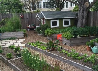 Raised Vegetable Garden Beds for Urban Gardening