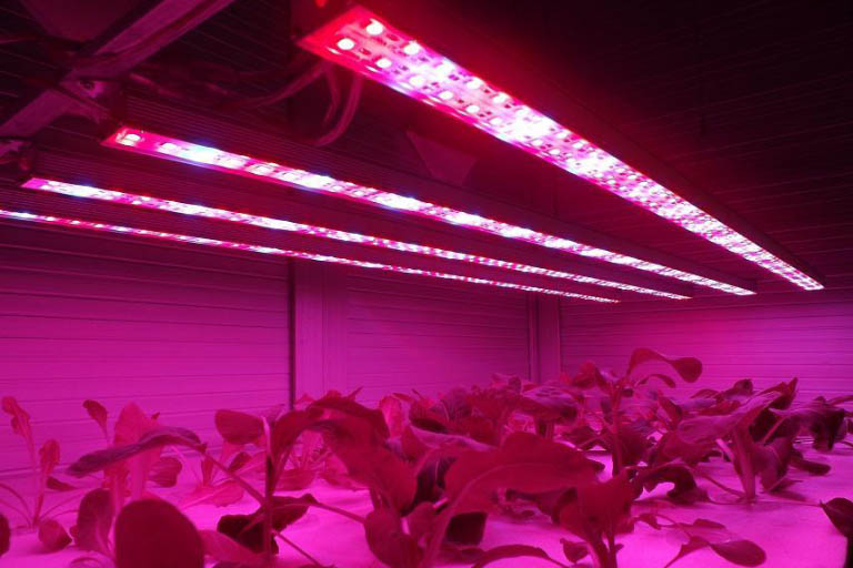 Are Cheap Grow Lights Safe for Me to Use