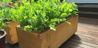 Grow Box
