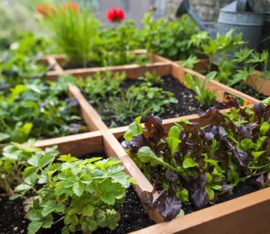 Easiest Vegetables To Grow