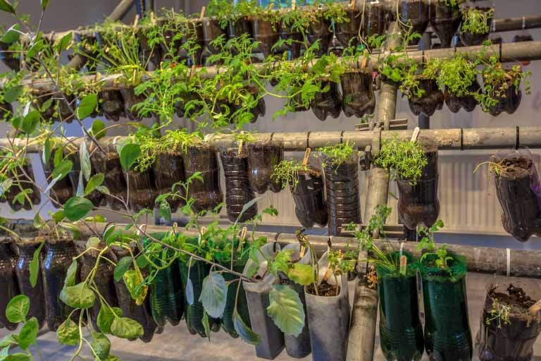 What You'll Need to Grow a Vertical Vegetable Garden