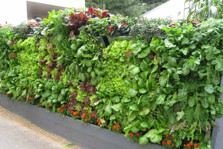 What is a Vertical Vegetable Garden