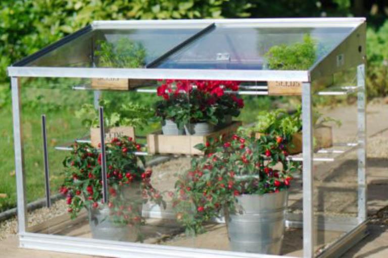 Where Can I Use a Mini Greenhouse