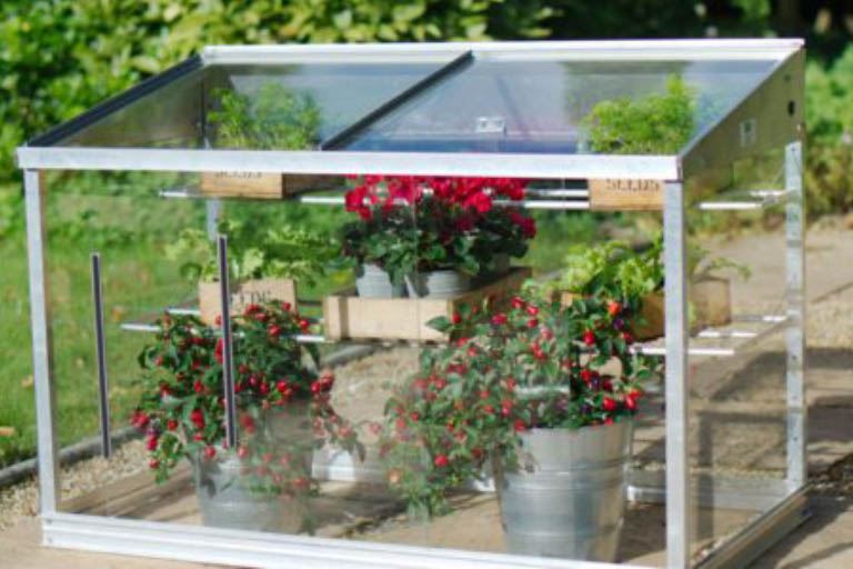 Mini greenhouse with plants