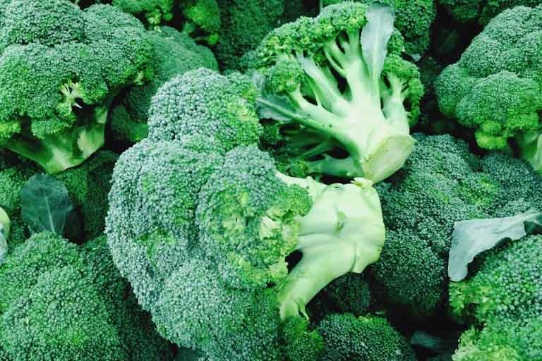 Harvesting Your Broccoli Plants
