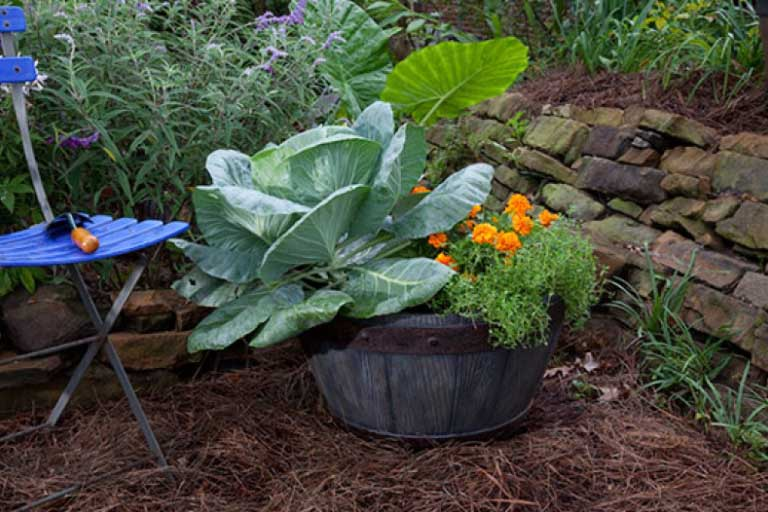 How Is Container Gardening Different