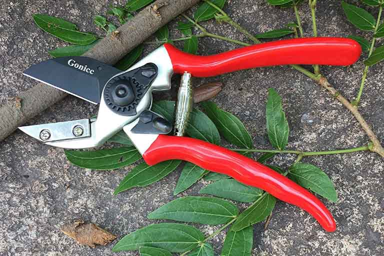 Types of Garden Clippers