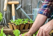 farmer planting with a seed starter kit
