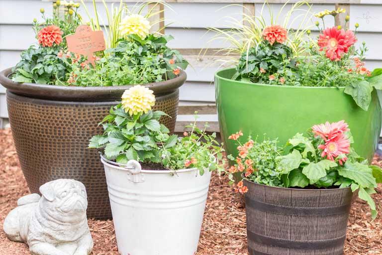 Typical plants found in bucket gardens