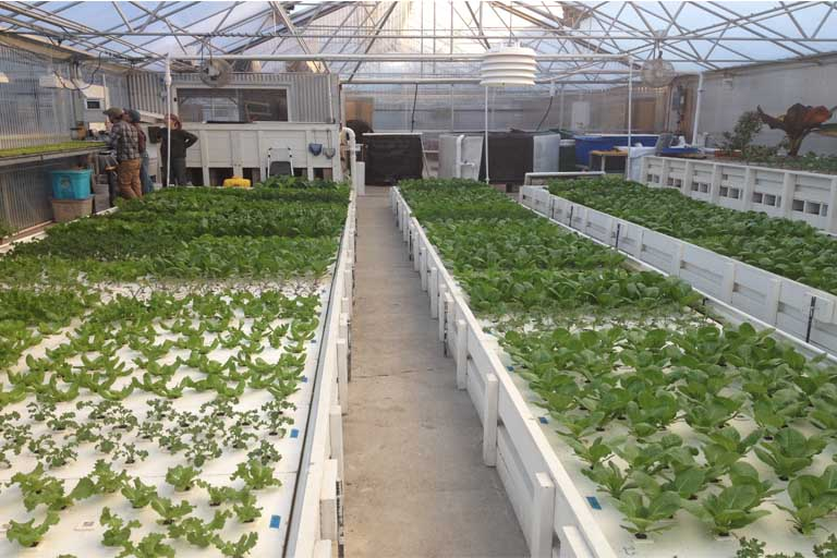 Deepwater Culture hydroponic system