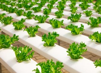 sample of a hydroponic garden