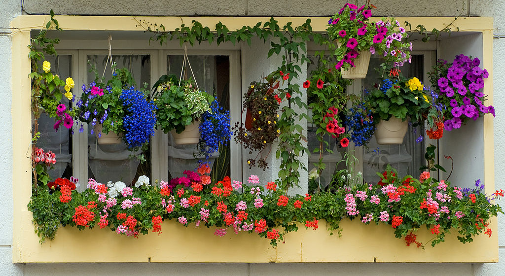 window boxes and hanging planters