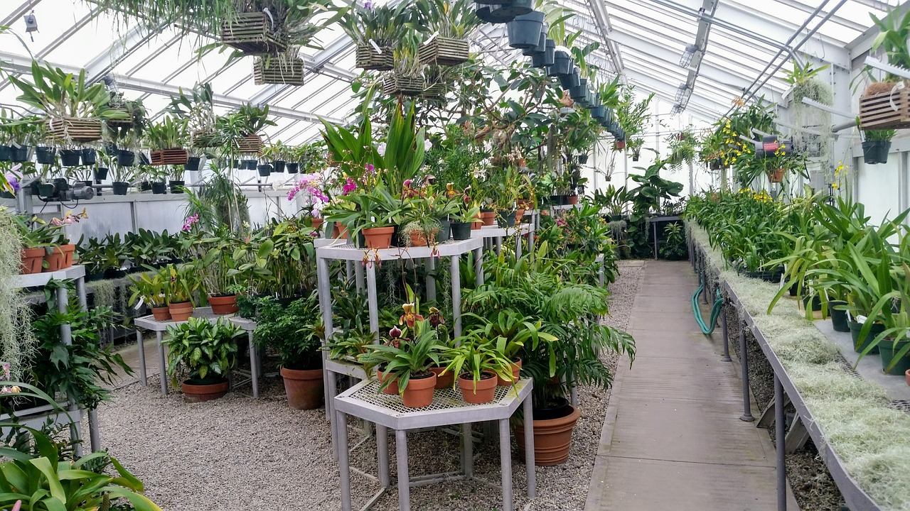 green house with plants