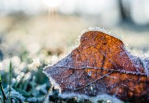 leaf on winter