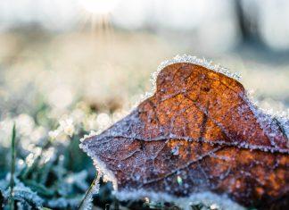 leaf on winter