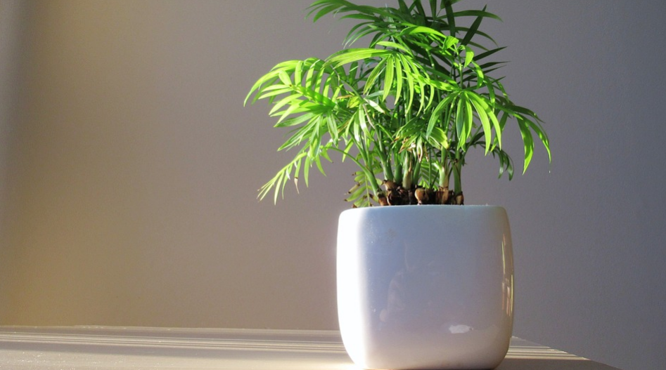 green indoor plant in a white pot