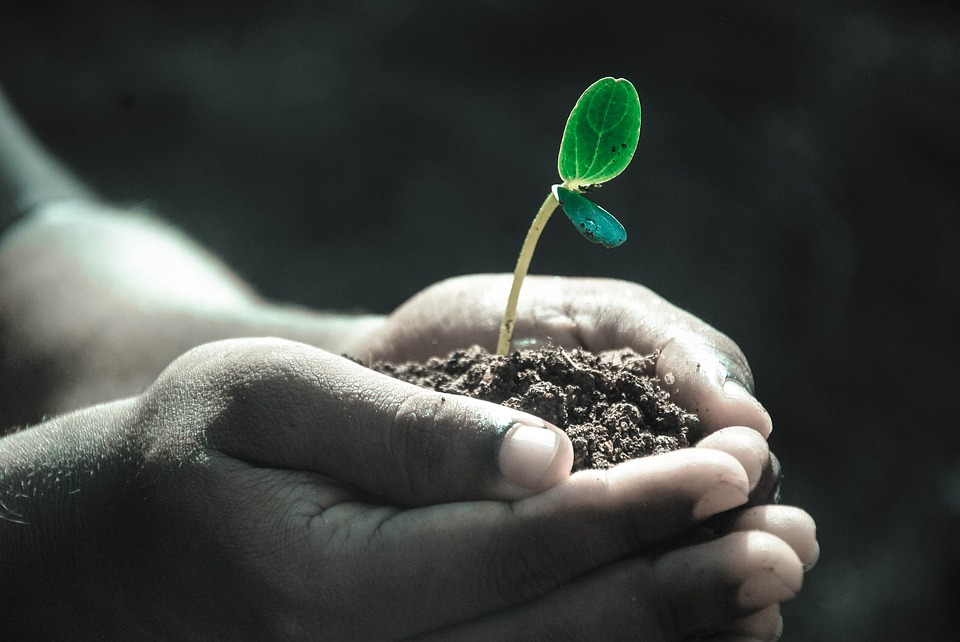 Hands holding soil with plant
