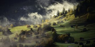 Landscape plants and fog
