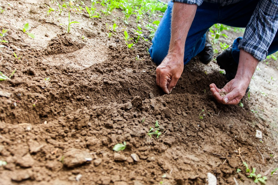 Man planting seed on soil