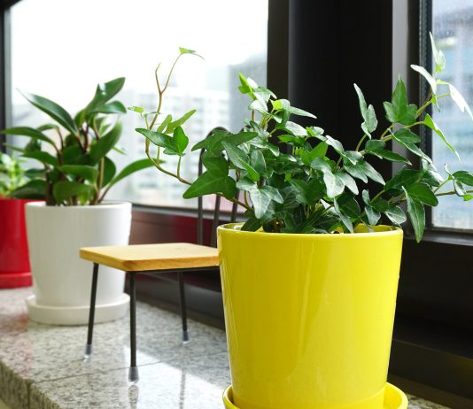 potted indoor plants