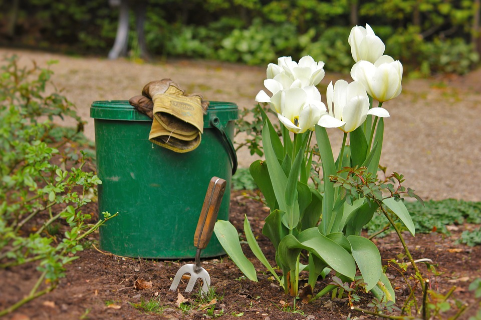 Tulip besides bucket