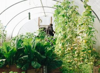 hoop house with a man inside
