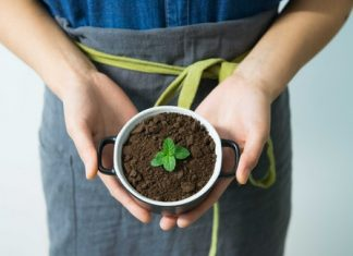person holding mint pot