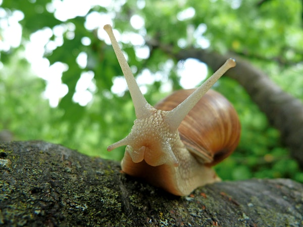 slug in a tree branch