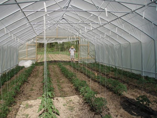 hoop house with a man standing outside
