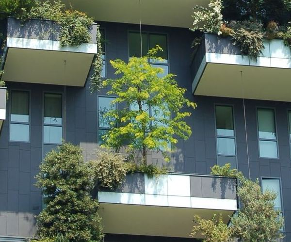 plants in the balconies of building