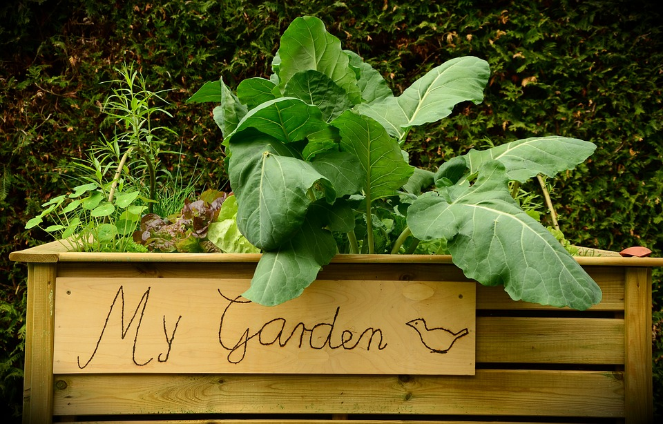 raised garden bed ideas for vegetables