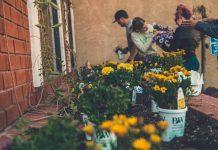 yellow flowers on bucket gardening