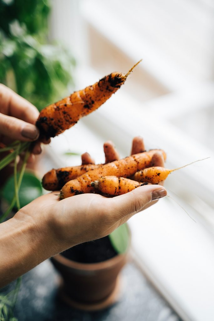 a person holding small carrots