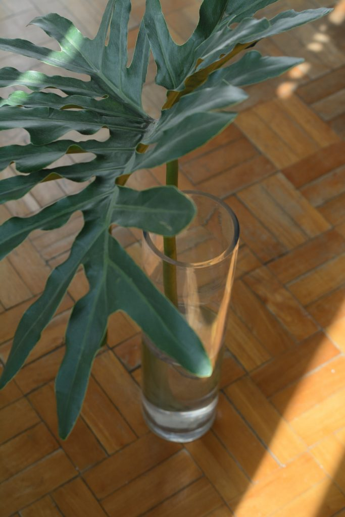 philodendron selloum on a glass container
