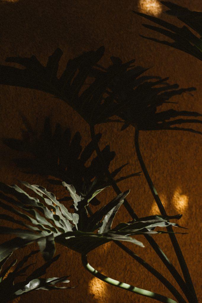plant getting sunlight