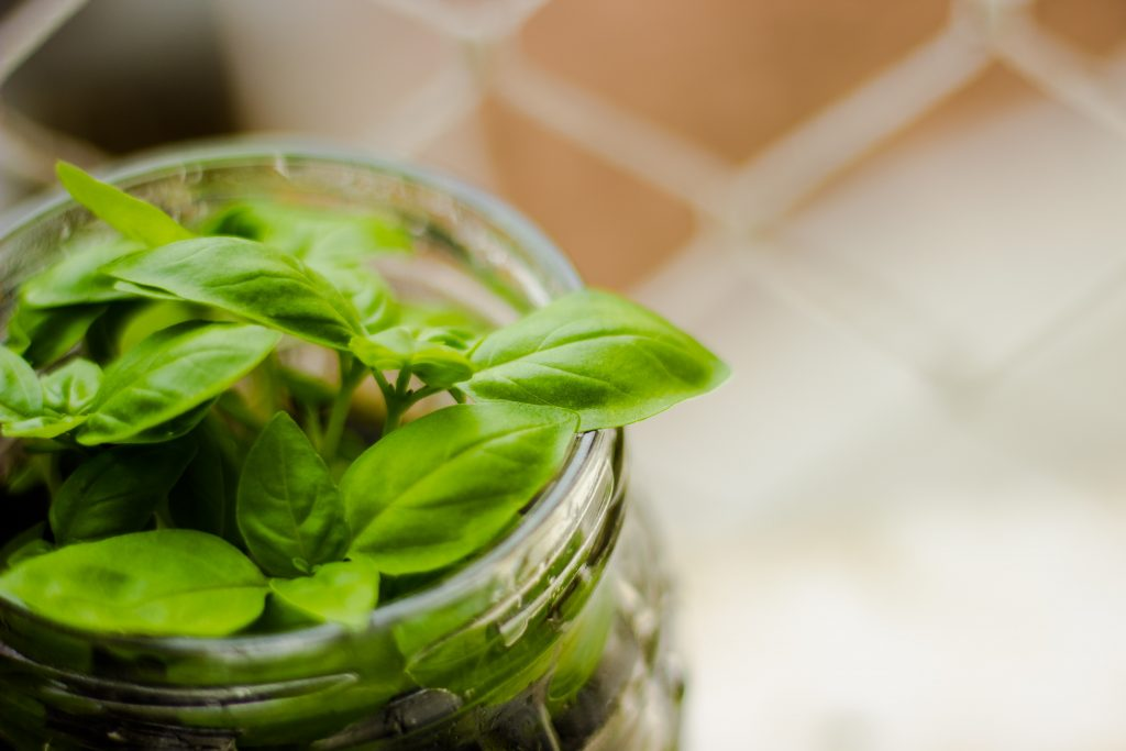 basil on masor jar