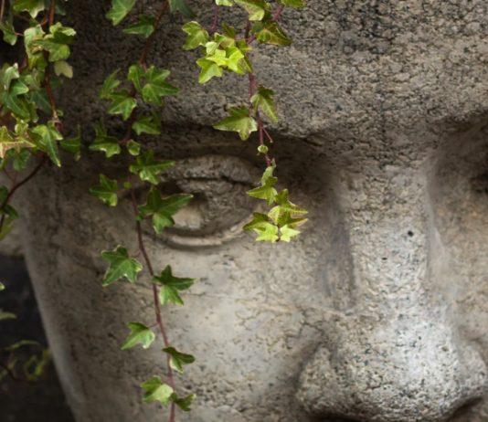 concrete head pot detail showing eyes and small leaved vining ivy