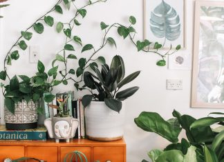 vivarium plants