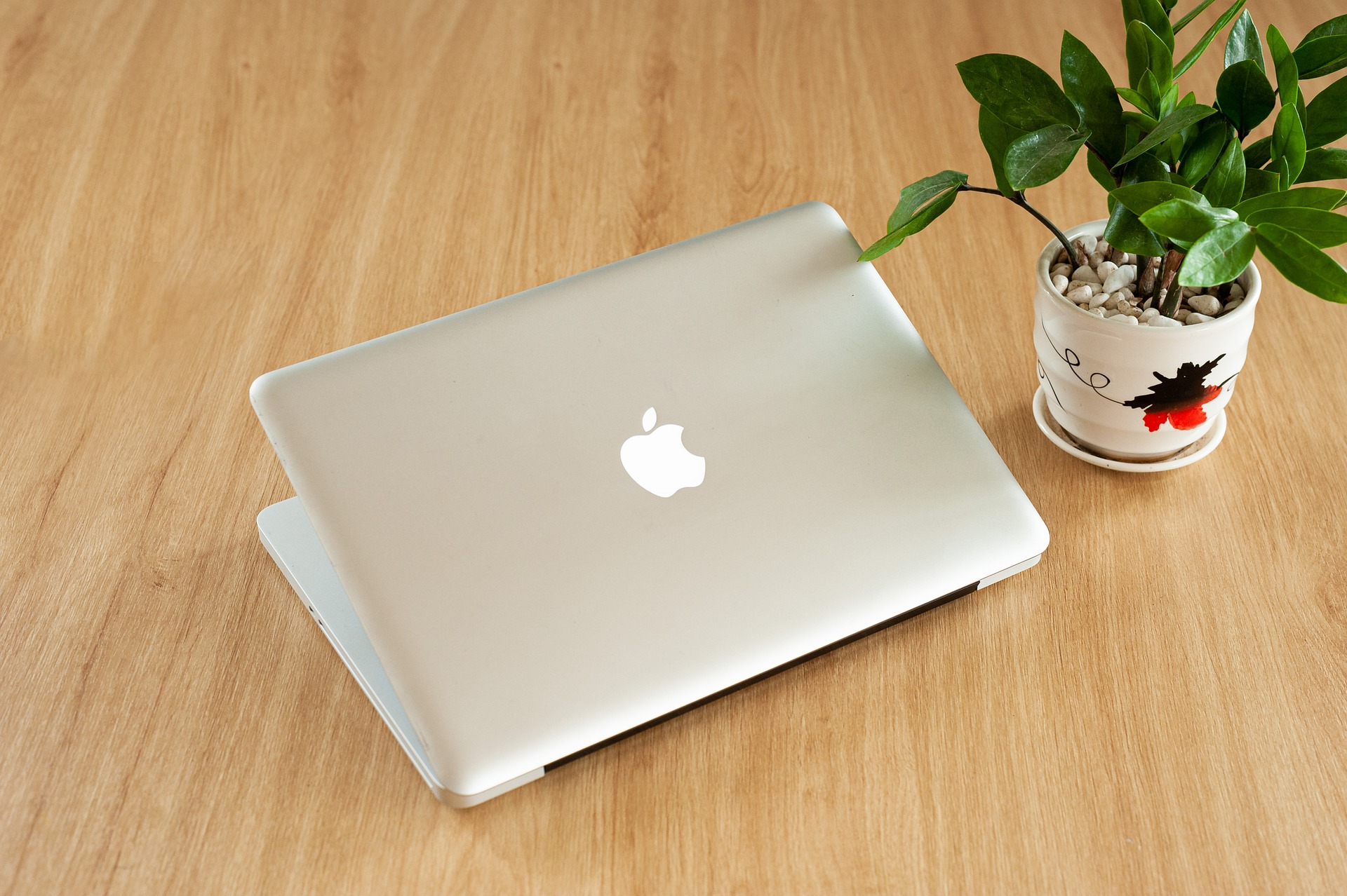 A plant and a laptop sitting on a table