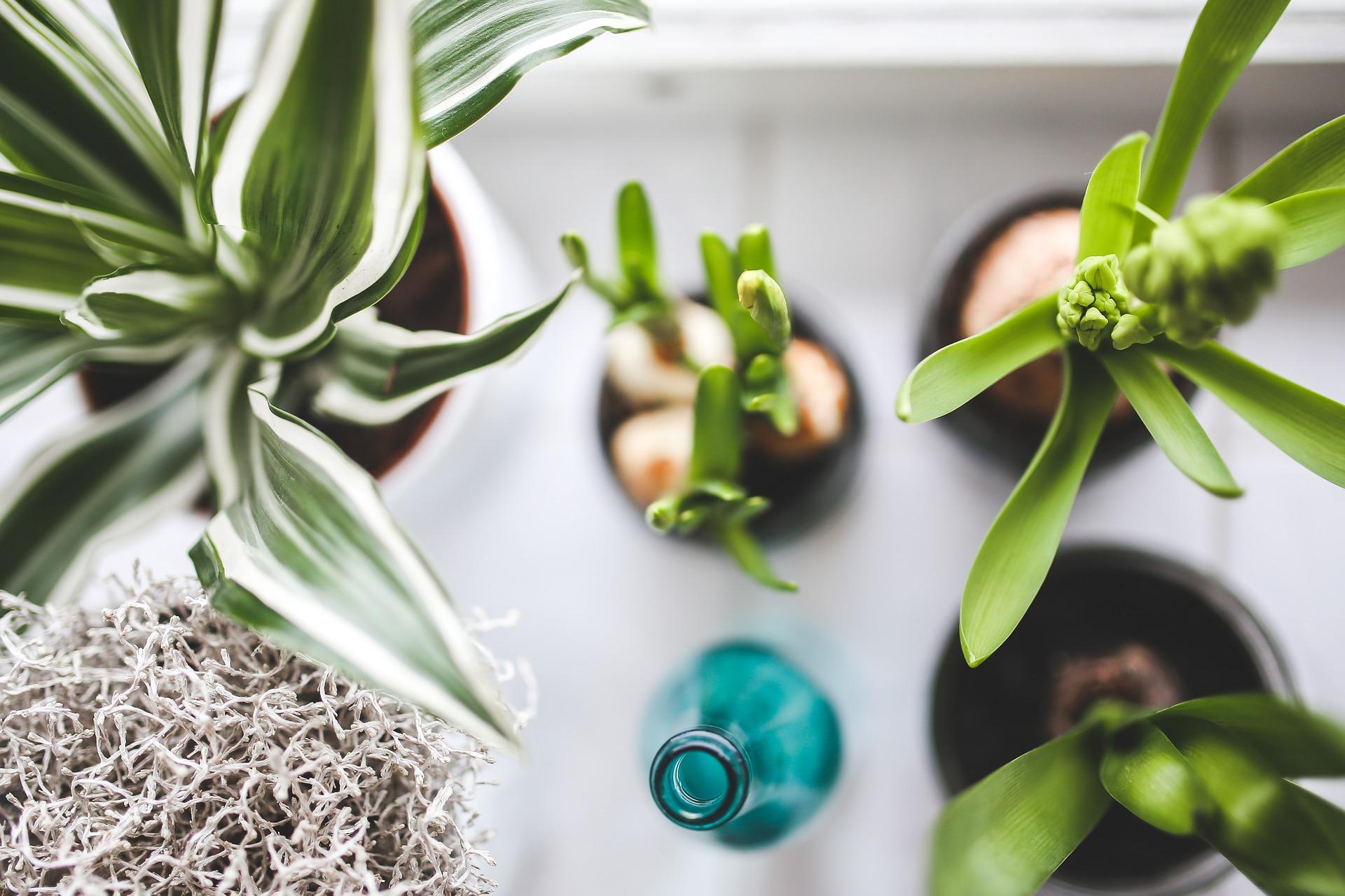 An array of houseplants